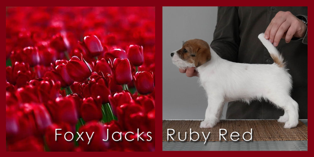 20180501 Foxy Jacks Ruby Red